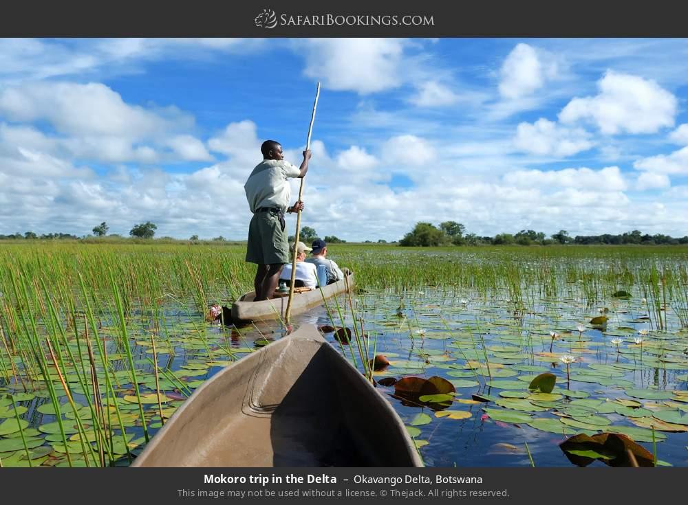 Mokoro trip in the delta in Okavango Delta, Botswana