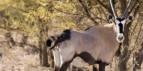 2-Day Central Kalahari Game Reserve Overnight Trip
