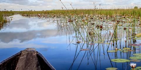 4-Day Exploration Okavango Delta and Khwai, Botswana