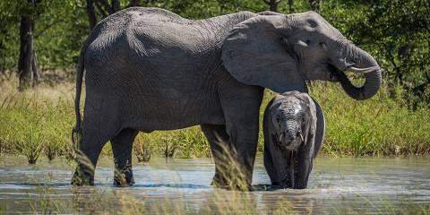 6-Day Botswana Northern Adventure