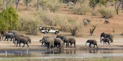 5-Day Moremi Game Reserve & Khwai Explorer