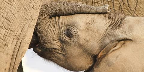 9-Day Botswana: Chobe, Okavango & Makgadikgadi