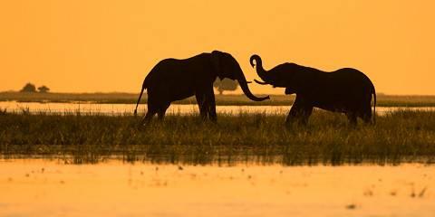 9-Day Best of Botswana Experience