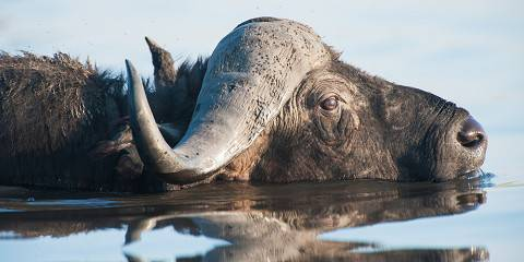 5-Day Botswana Safari Tour