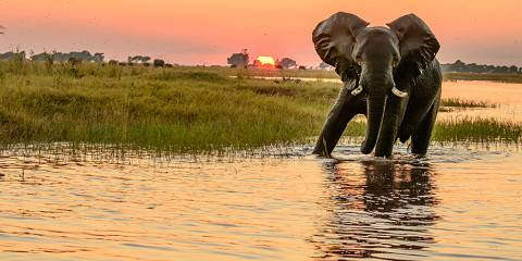 5-Day Luxury Chobe National Park Safari & Victoria Falls