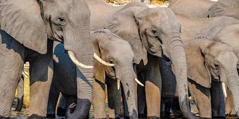 9-Day Botswana Wildlife Safari
