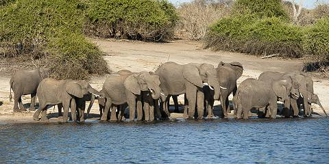 8-Day Fly - in Safari - Botswana (Adveture Camps)