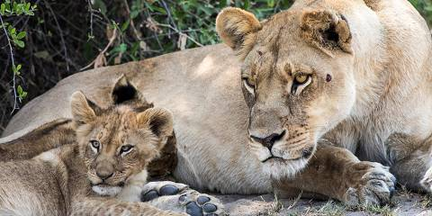 10-Day Adventurous Family Safari