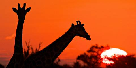 4-Day Savuti and Chobe Explore