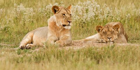 7-Day 4-Star Okavango Delta, Chobe NP & Victoria Falls
