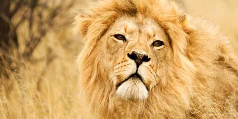 8-Day Victoria Falls, Chobe, Salt Pans & Okavango Delta