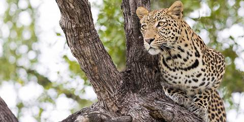 7-Day Okavango Delta Green Season Special