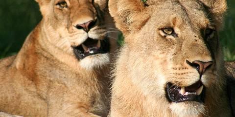 6-Day Luxury Botswana Safari Tour