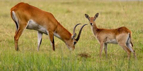 4-Day Okavango Delta Safari Tour