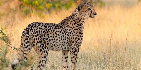 7-Day Miracle Rivers Mobile Tented Safari