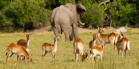 3-Day Camping Safari in the Chobe National Park