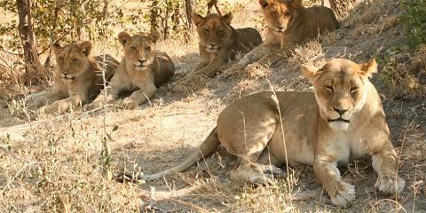 7-Day Victoria Falls, Chobe to Okavango Camping Safari