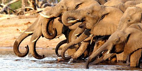 7-Day Livingstone Classic Safari