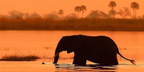 6-Day Affordable Chobe and Delta Explorer