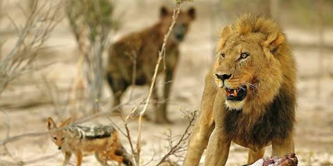 4-Day Safari & Private Reserve Highlight