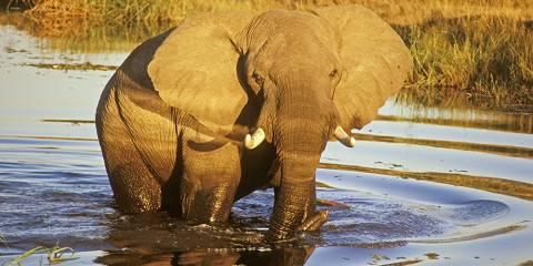 8-Day Botswana Honeymoon Safari – Classic