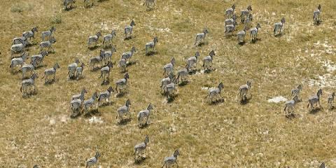 5-Day Rift Valley Lakes and the Maasai Mara Safari