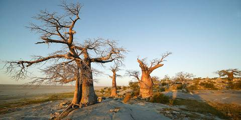 4-Day Nxai Pan, Baines Baobabs and Makgadikgadi Pans