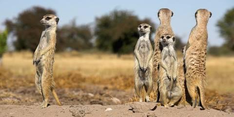 9-Day Kalahari Trails