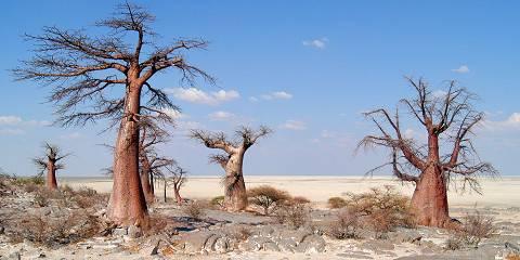 7-Day Wild Serengeti Experience