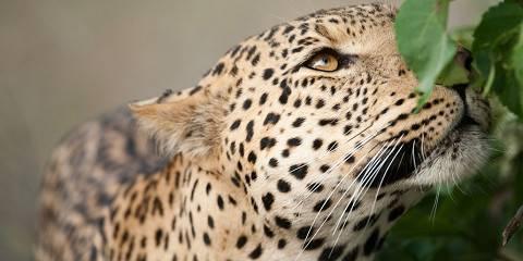9-Day Luxury Botswana Safari and Mozambique Beach