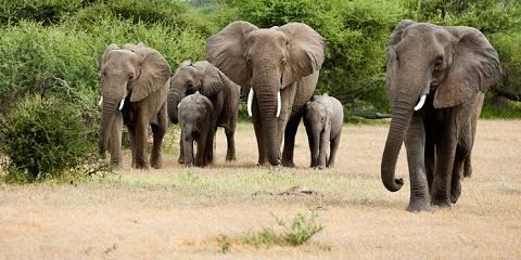 9-Day Discover Windhoek Kalahari Okavango Victoria Falls