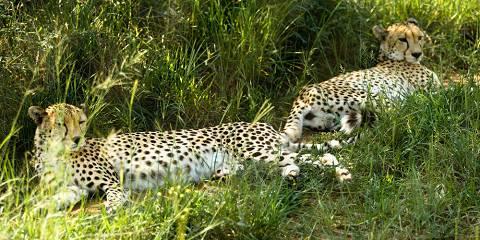 5-Day Big Five Safari in Okavango Delta, Botswana