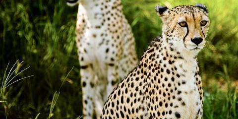 7-Day Makgadikgadi N Park Tsodilo Hills & Okavango Delta