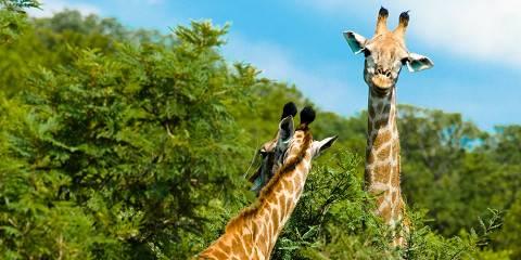 7-Day Tanzania Highlights Safari