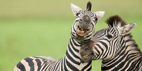 7-Day Zebra Migration & Okavango Delta