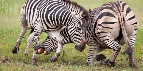 7-Day Victoria Falls, Chobe and Hwange Tour Package