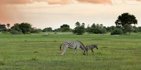 5-Day Savuti, Khwai, Mababe Safari