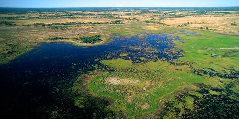 4-Day Botswana Walking Safari - Okavango Delta