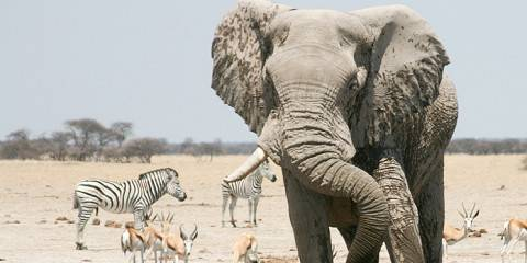 15-Day Experience Africa