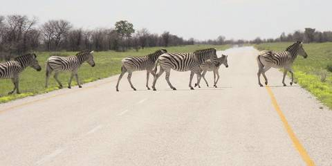The Best of Kenya Adventure Safari-Minivan