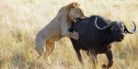 3-Day Moremi Game Reserve Special