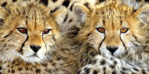 3-Day Central Kalahari - Adventurer Safari