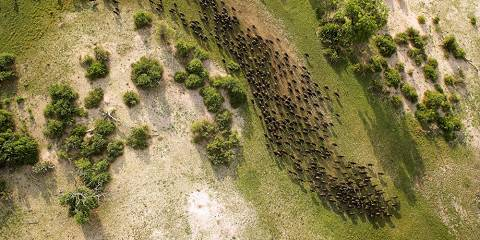 5-Day Selous Game Reserve and Mikumi National Park