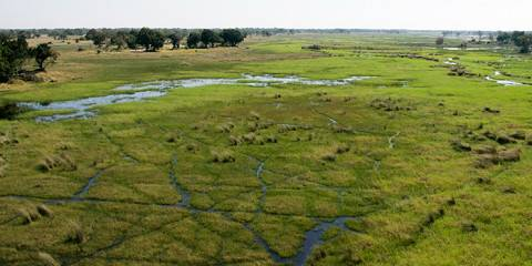3-Day Okavango Delta (Chief's Island) Boating Safari