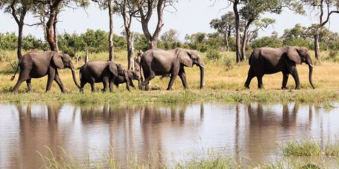 6-Day Chobe Luxury Cruise & Safari