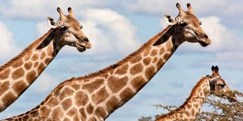 7-Day Okavango Delta, Moremi and Selinda Safari