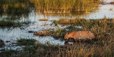 13-Day South Africa & Botswana | Cape, Timbavati & Delta
