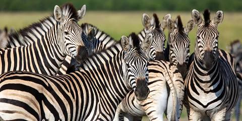 4-Day Botswana Makgadikgadi Zebra Migration Experience