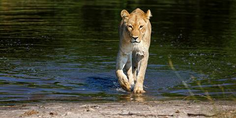 3-Day Affordable Okavango Delta Safari - Tented Camp