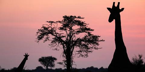 5-Day Makgadikgadi & Nxai Pans Safari in Botswana